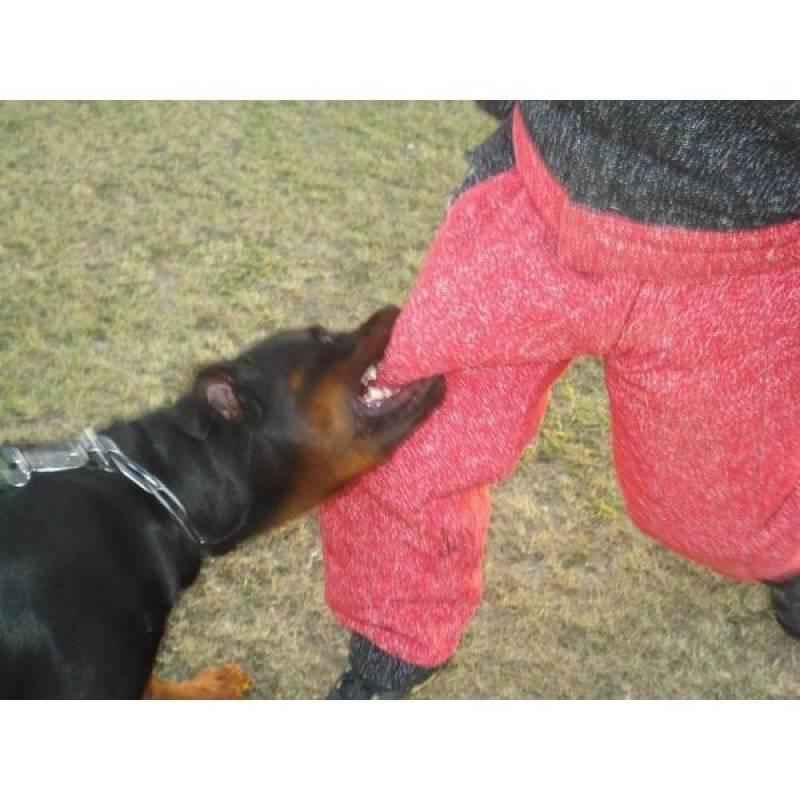 cães farejadores para navios Osasco