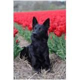 Treinador para Cachorros Farejadores