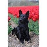 treinamento para cão farejador