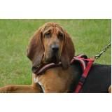 cães para faro de animais perdidos preço Higienópolis