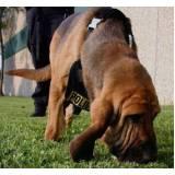 cães para faro de animais perdidos Bom Retiro