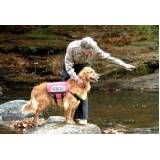 cão de faro treinamento preço Vila Olímpia