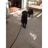 cão de segurança para locação Raposo Tavares