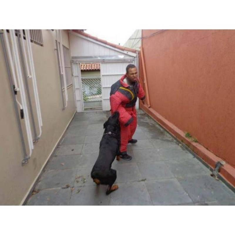 cão de segurança Vila Olímpia