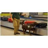 cão farejador aeroporto Cotia
