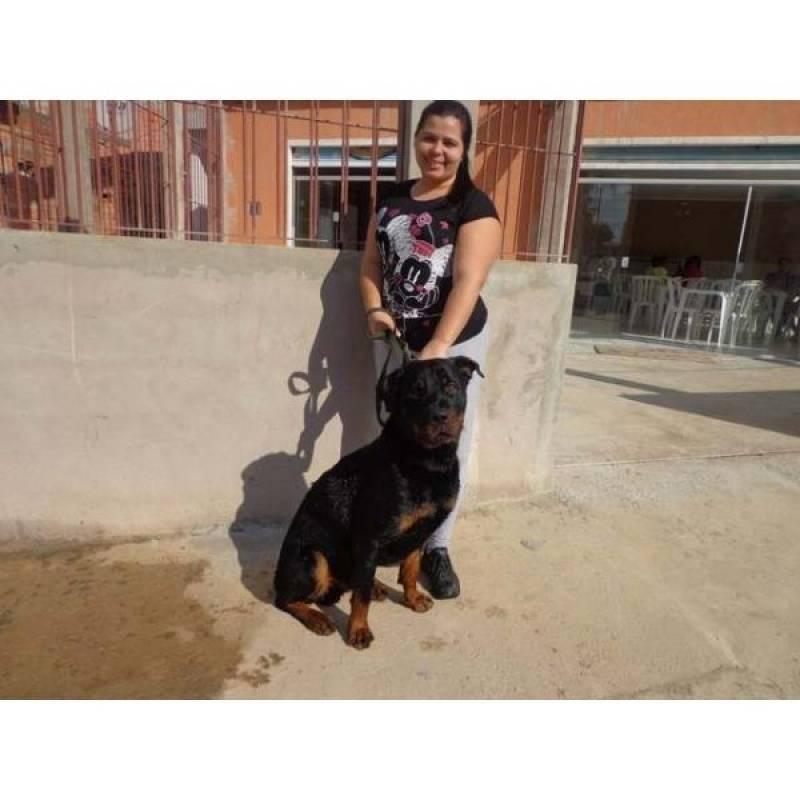 Cão Farejador de Aluguel