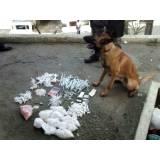 cão farejador drogas preço Higienópolis