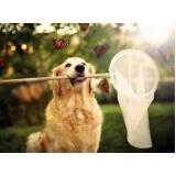 creche day care para cachorros Vila Olímpia