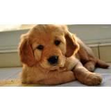 creche de hospedagem para cachorro em SP Osasco