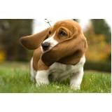 Creche e Pet Shop para Cachorro