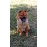creches para cães Butantã