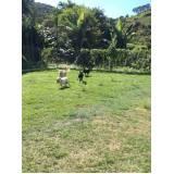 curso de adestramento canino preço Lapa