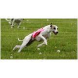 curso de adestramento canino Raposo Tavares
