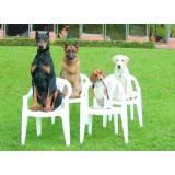 curso de adestramento de cães presencial preço Butantã