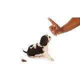 curso de adestramento de cães presencial Alto da Lapa