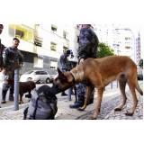 curso para treinar cão de faro preço Granja Viana