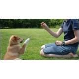 curso de adestramento animal