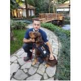 curso de adestramento e psicologia canina