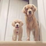 day care canino preço Vila Olímpia