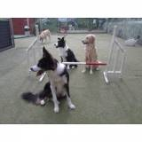 day care de cachorro em SP Higienópolis
