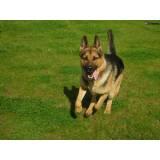 day care para cães em SP Lapa