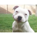 day care para cão Alphaville