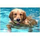 spa para cães