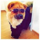 detetive de cachorro perdido preço Santana de Parnaíba