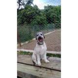 detetive para resgatar cães perdidos preço Aldeia da serra -