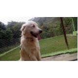 detetive para resgatar cães perdidos Morumbi