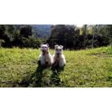 detetives de cães perdidos preço Cotia