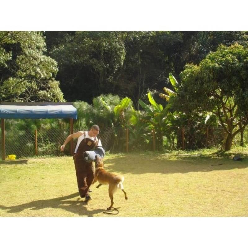 empresa de adestramento de cães bravos Raposo Tavares