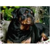 empresa de locação de cachorro de segurança Rio Pequeno