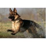 encontrar cachorro perdido com cão farejador preço Alto da Lapa