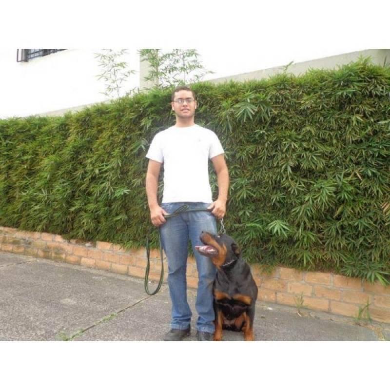 especialista de encontrar cachorros perdidos Granja Viana