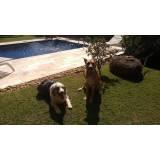 hotéis para cachorros grandes e forte Rio Pequeno