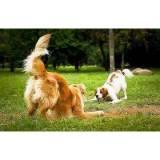 hotéis para cães Aldeia da serra -