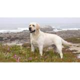hotéis para cão quanto custa Jardim Bonfiglioli