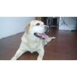 hotel cão Jaguaré
