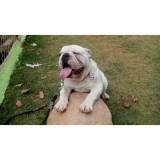 hotel para cachorro em SP quanto custa Morumbi