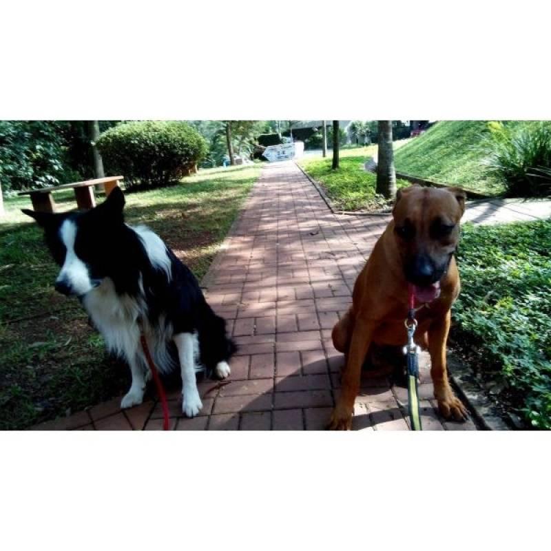 hospedagem de cachorro