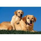 hotel para cachorro preços Vila Olímpia