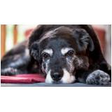 hotelzinho para cachorro idoso Barueri
