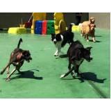hotelzinhos de cachorro com agility Bela Vista
