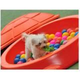 hotelzinhos de cachorro com atividades físicas Morumbi