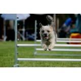 hotelzinho de cachorro com agility