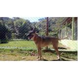 locação cão de guarda Bela Vista