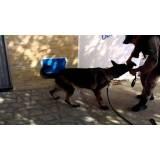 locação de cães de faro Rio Pequeno