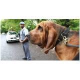 locação de cão de faro Higienópolis