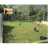 onde alugar cachorro segurança Jaguaré